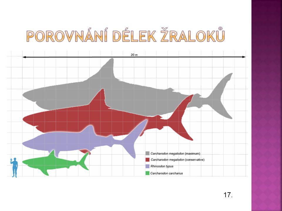 Porovnání délek žraloků