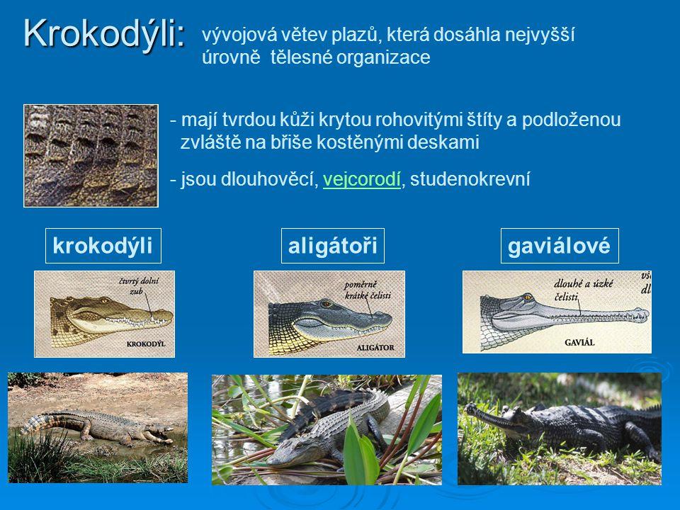 Krokodýli: krokodýli aligátoři gaviálové