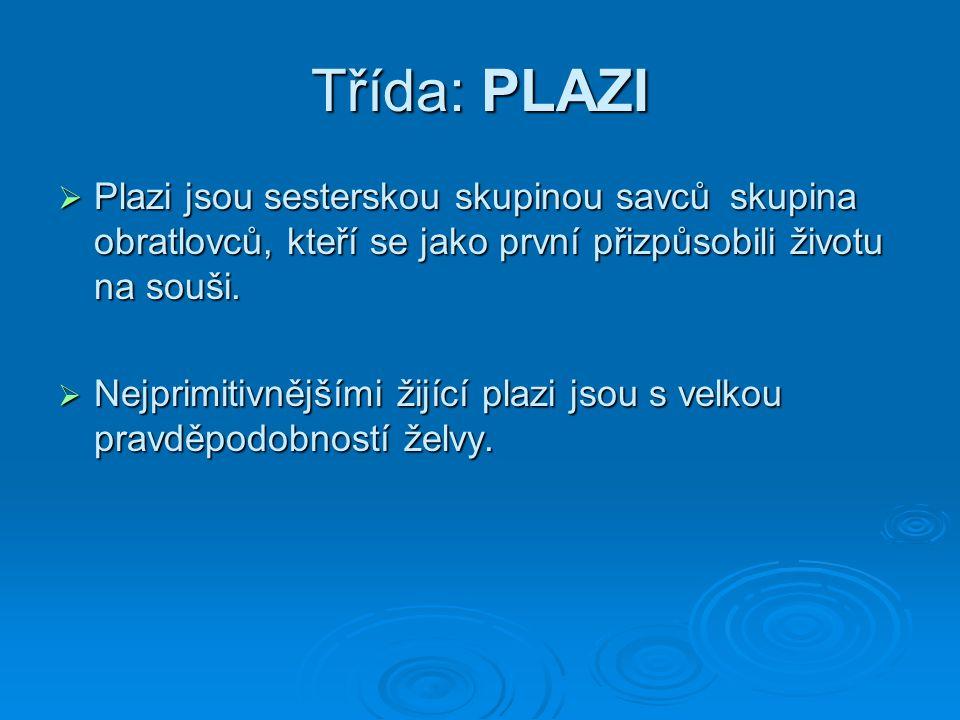 Třída: PLAZI Plazi jsou sesterskou skupinou savců skupina obratlovců, kteří se jako první přizpůsobili životu na souši.