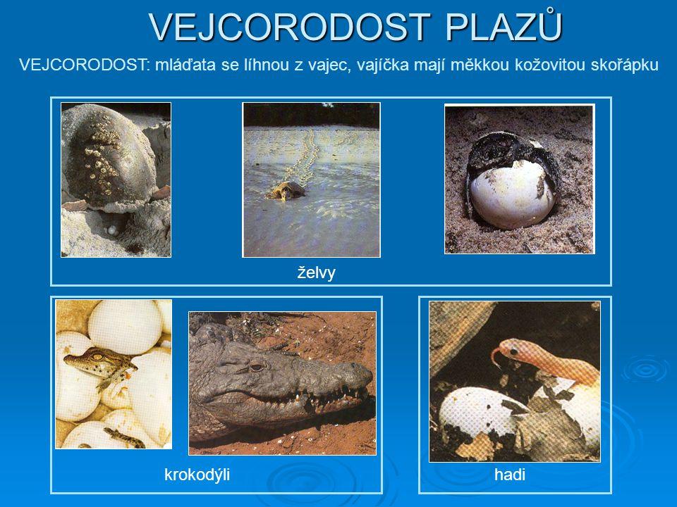 VEJCORODOST PLAZŮ VEJCORODOST: mláďata se líhnou z vajec, vajíčka mají měkkou kožovitou skořápku. želvy.