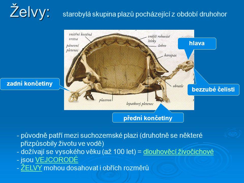 Želvy: starobylá skupina plazů pocházející z období druhohor