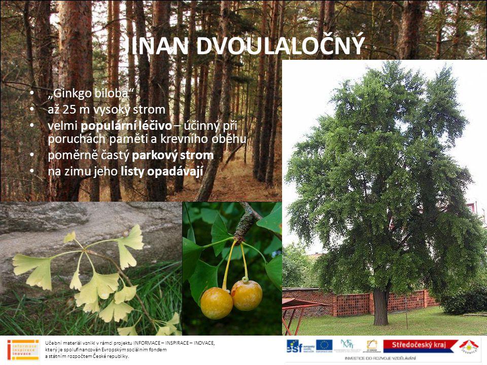 """JINAN DVOULALOČNÝ """"Ginkgo biloba až 25 m vysoký strom"""
