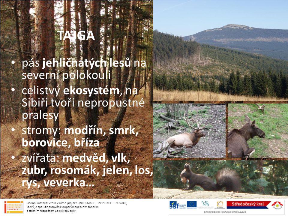 TAJGA pás jehličnatých lesů na severní polokouli