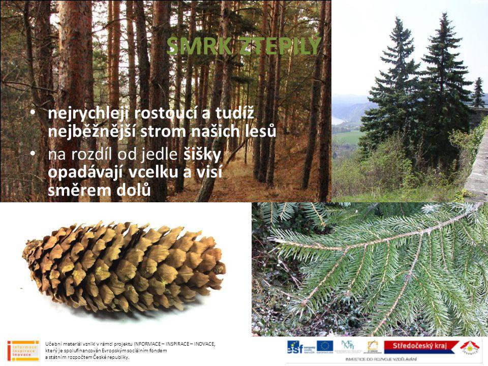 SMRK ZTEPILÝ nejrychleji rostoucí a tudíž nejběžnější strom našich lesů. na rozdíl od jedle šišky opadávají vcelku a visí směrem dolů.