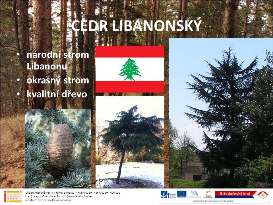 CEDR LIBANONSKÝ národní strom Libanonu okrasný strom kvalitní dřevo
