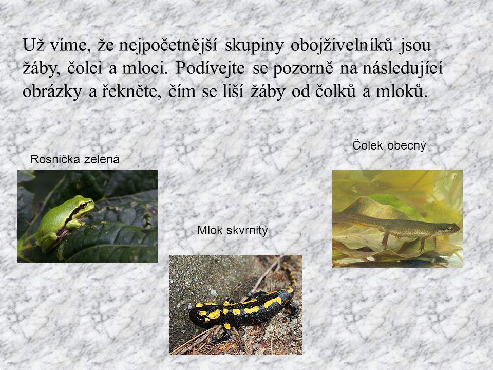 Už víme, že nejpočetnější skupiny obojživelníků jsou žáby, čolci a mloci. Podívejte se pozorně na následující obrázky a řekněte, čím se liší žáby od čolků a mloků.