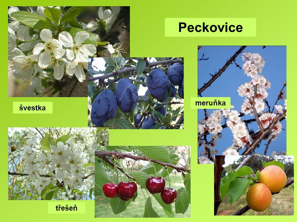 Peckovice meruňka švestka třešeň