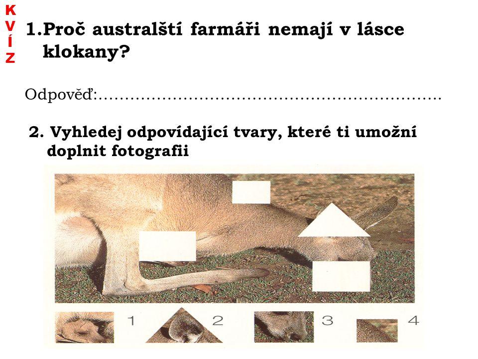 Proč australští farmáři nemají v lásce klokany