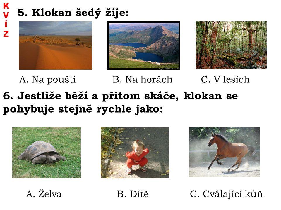 K V. Í. Z. 5. Klokan šedý žije: A. Na poušti. B. Na horách. C. V lesích.