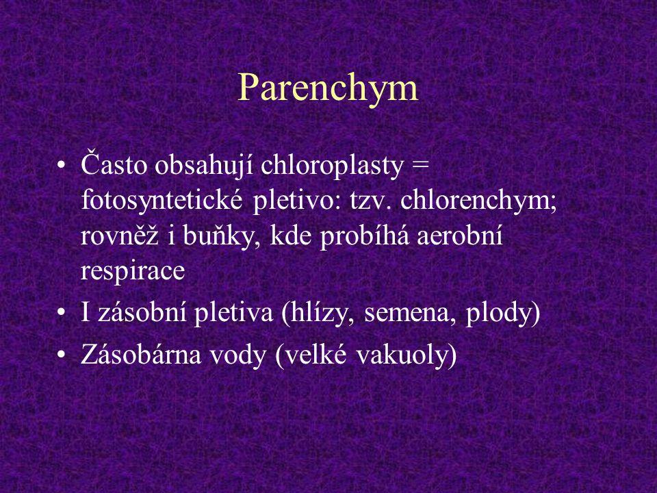 Parenchym Často obsahují chloroplasty = fotosyntetické pletivo: tzv. chlorenchym; rovněž i buňky, kde probíhá aerobní respirace.