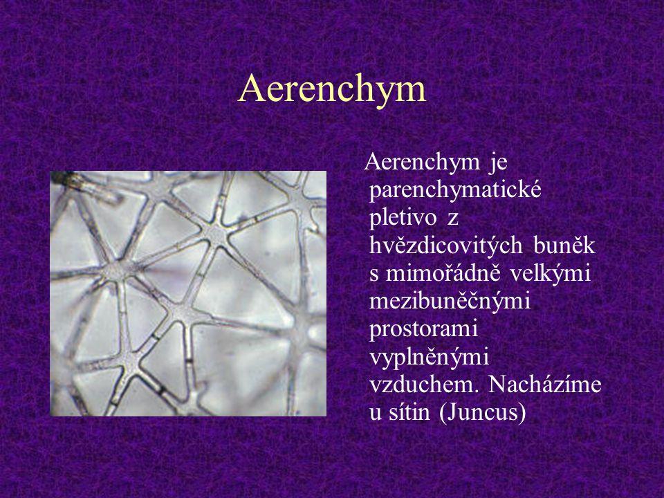 Aerenchym