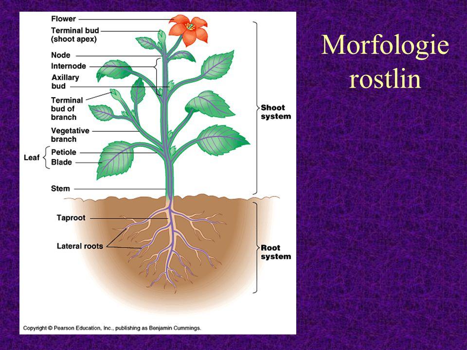 Morfologie rostlin