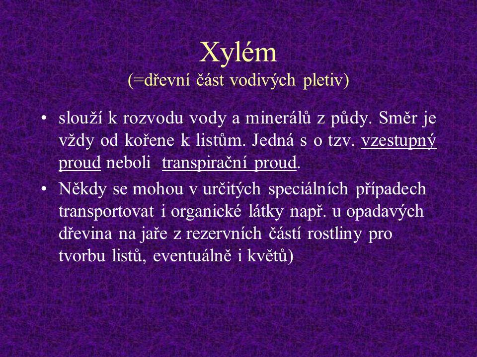 Xylém (=dřevní část vodivých pletiv)