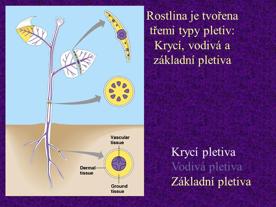 Rostlina je tvořena třemi typy pletiv: Krycí, vodivá a základní pletiva