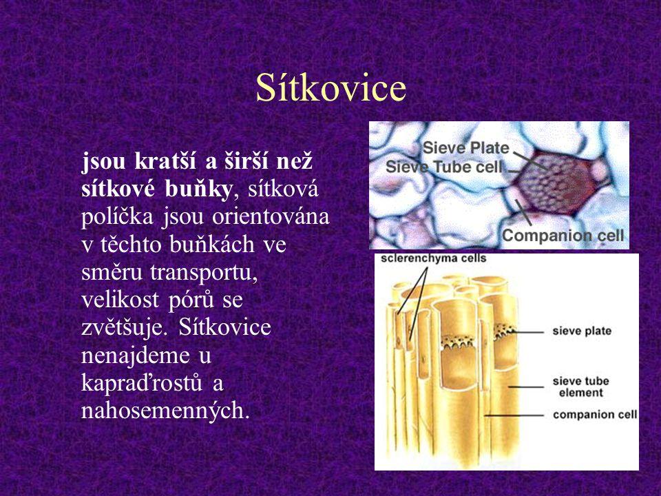 Sítkovice