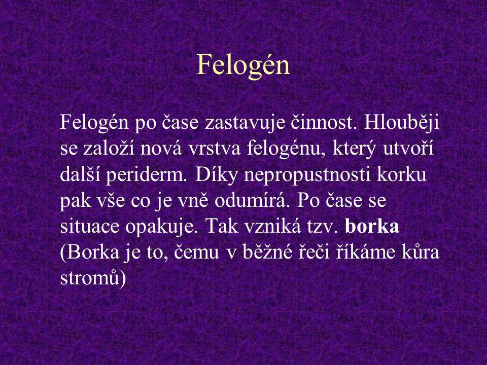 Felogén
