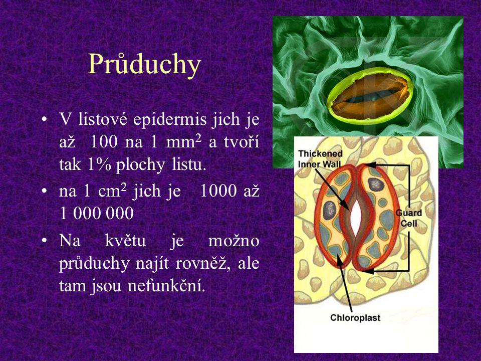 Průduchy V listové epidermis jich je až 100 na 1 mm2 a tvoří tak 1% plochy listu. na 1 cm2 jich je 1000 až 1 000 000.
