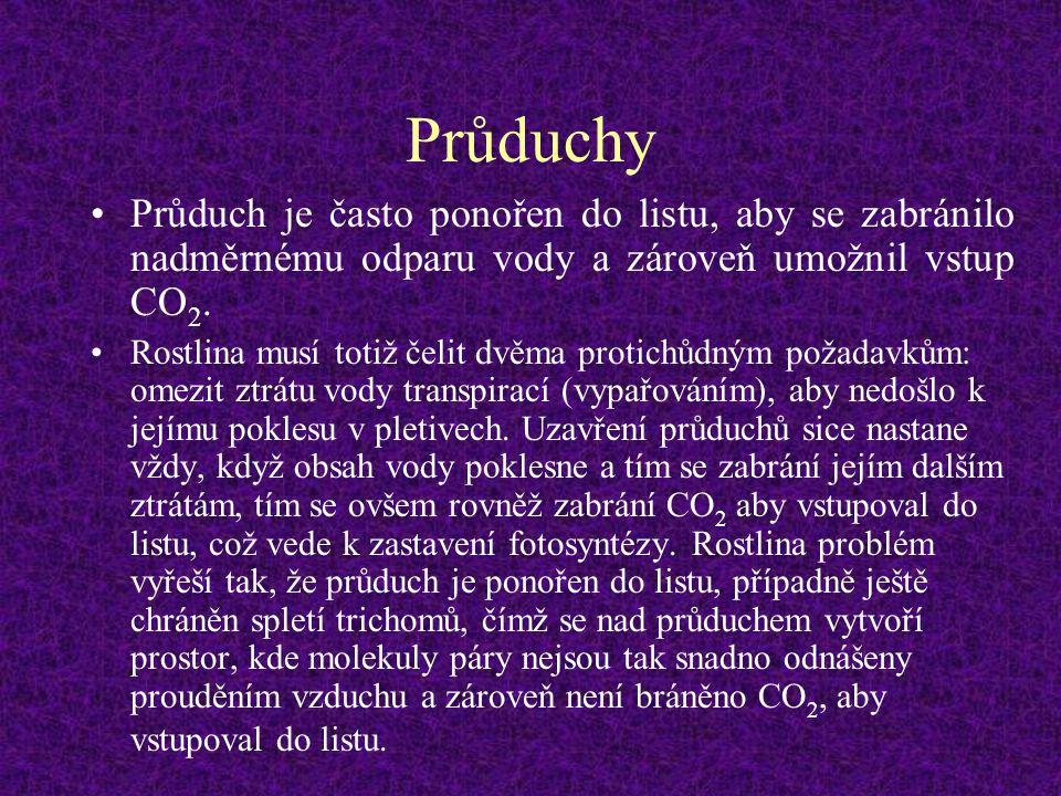 Průduchy Průduch je často ponořen do listu, aby se zabránilo nadměrnému odparu vody a zároveň umožnil vstup CO2.