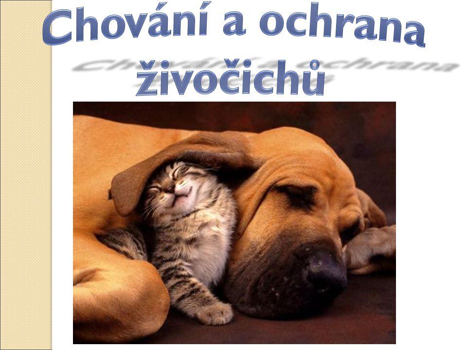 Chování a ochrana živočichů