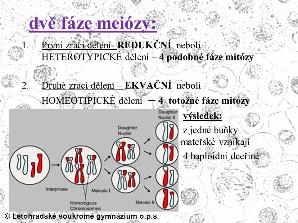 dvě fáze meiózy: První zrací dělení- REDUKČNÍ neboli HETEROTYPICKÉ dělení – 4 podobné fáze mitózy.