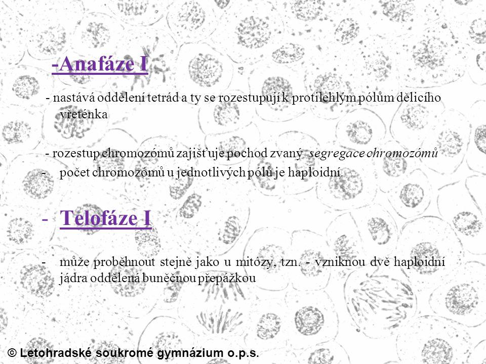 -Anafáze I - nastává oddělení tetrád a ty se rozestupují k protilehlým pólům dělicího vřeténka.