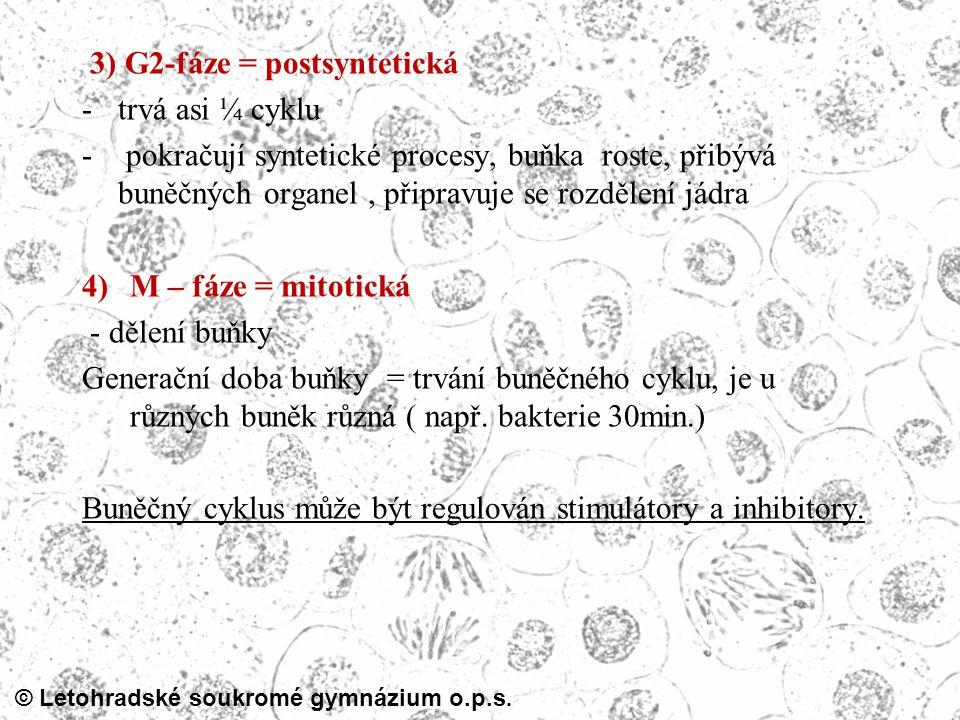 3) G2-fáze = postsyntetická
