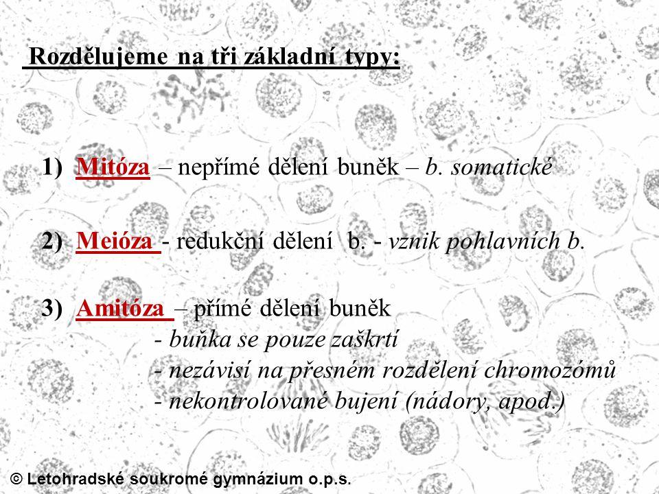 Rozdělujeme na tři základní typy: 1) Mitóza – nepřímé dělení buněk – b