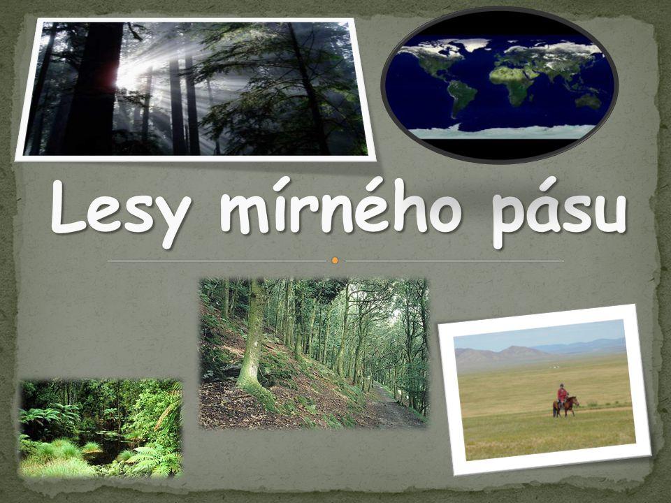 Lesy mírného pásu
