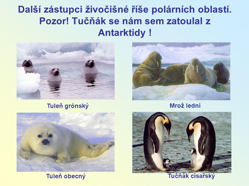Další zástupci živočišné říše polárních oblastí. Pozor