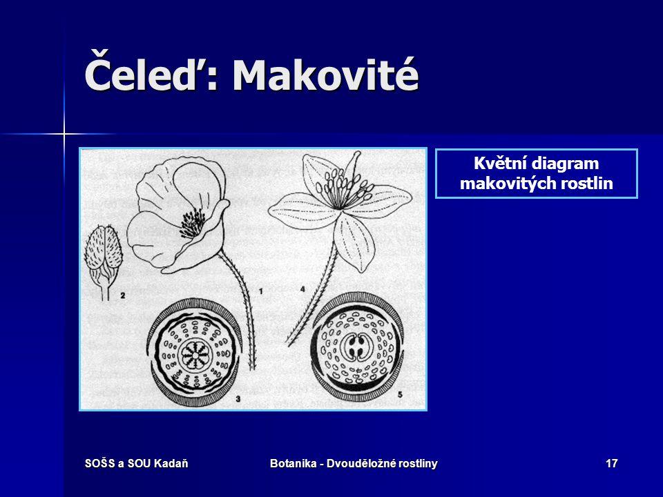 Květní diagram makovitých rostlin Botanika - Dvouděložné rostliny