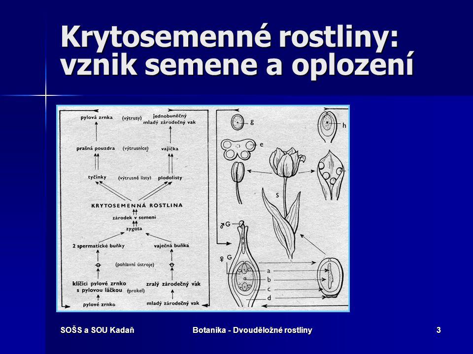 Krytosemenné rostliny: vznik semene a oplození