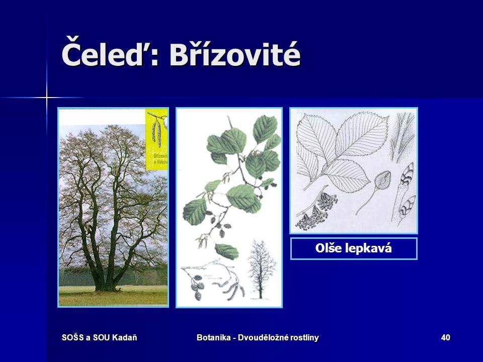 Botanika - Dvouděložné rostliny