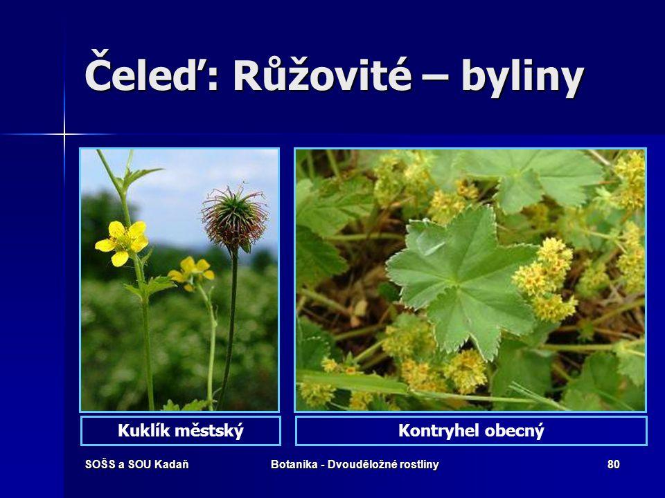 Čeleď: Růžovité – byliny