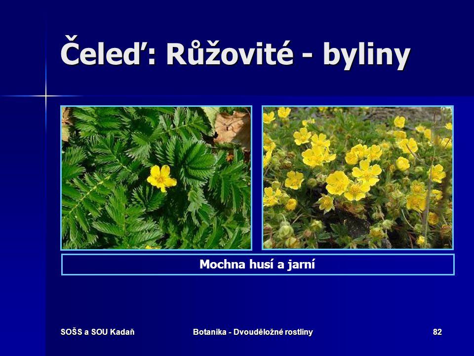 Čeleď: Růžovité - byliny