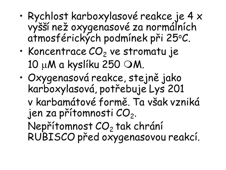 Rychlost karboxylasové reakce je 4 x vyšší než oxygenasové za normálních atmosférických podmínek při 25oC.