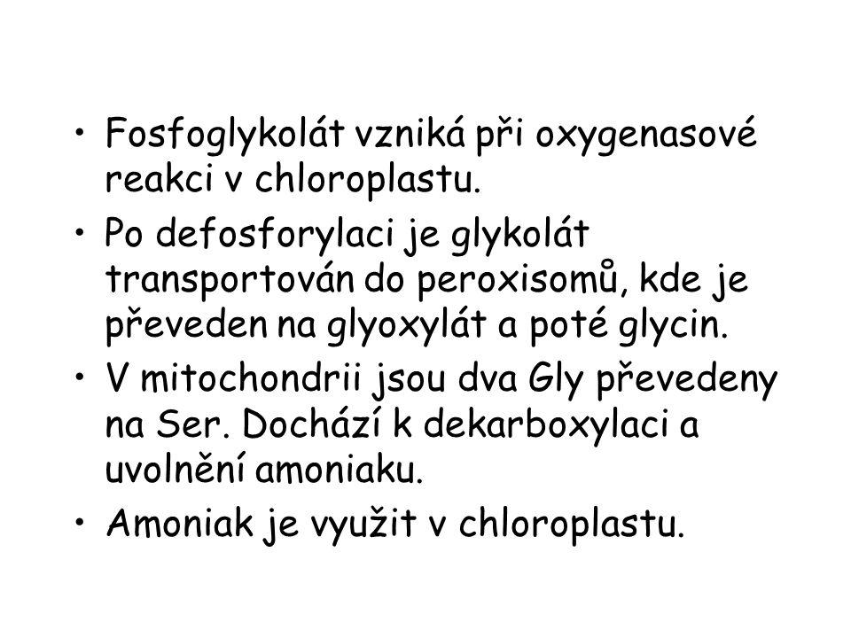 Fosfoglykolát vzniká při oxygenasové reakci v chloroplastu.