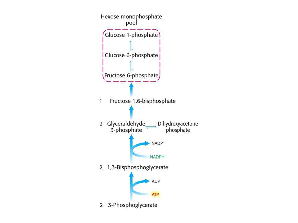 Tvorba hexosafosfátu.