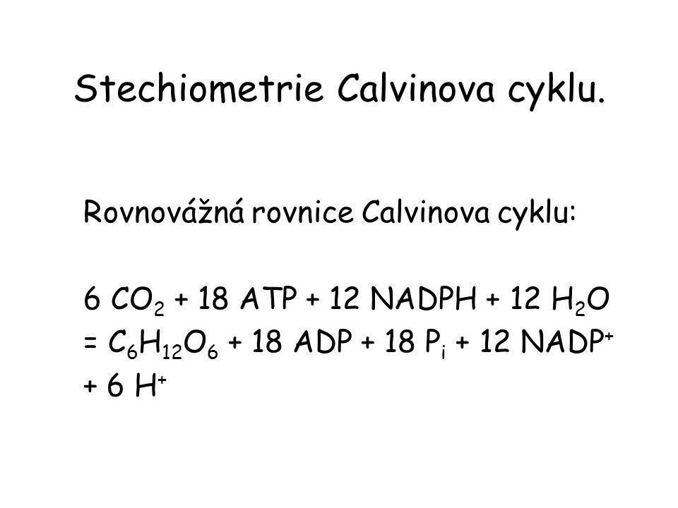 Stechiometrie Calvinova cyklu.