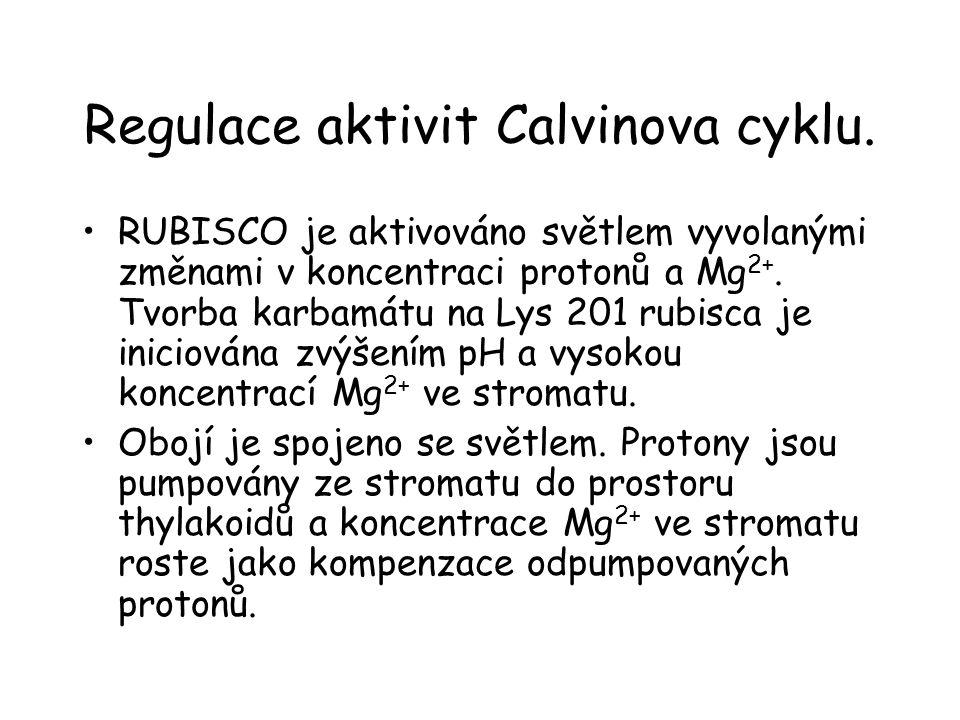 Regulace aktivit Calvinova cyklu.