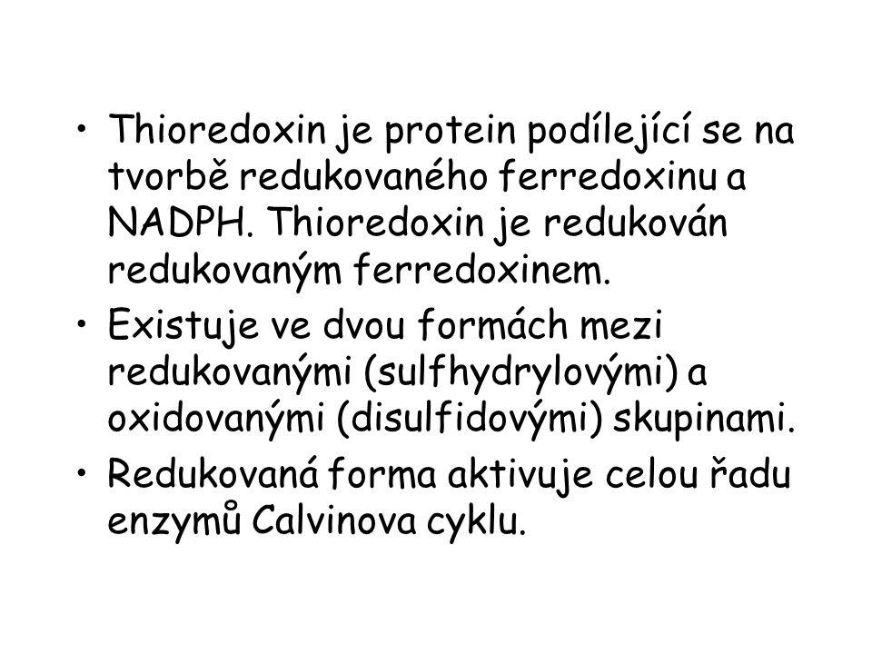 Thioredoxin je protein podílející se na tvorbě redukovaného ferredoxinu a NADPH. Thioredoxin je redukován redukovaným ferredoxinem.
