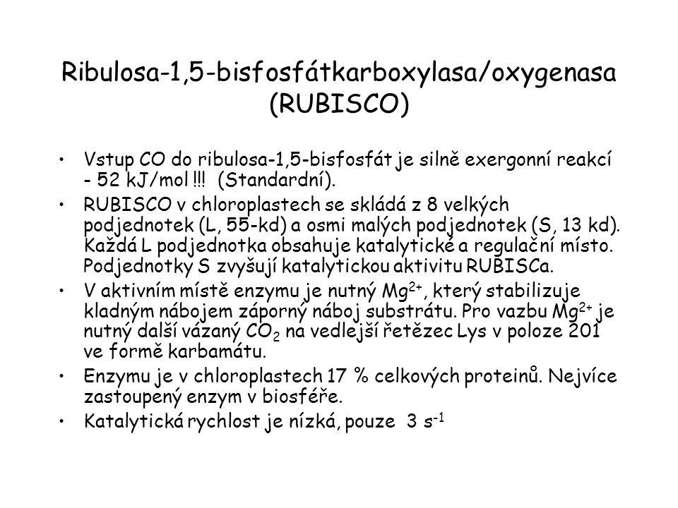 Ribulosa-1,5-bisfosfátkarboxylasa/oxygenasa (RUBISCO)
