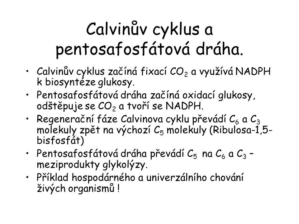 Calvinův cyklus a pentosafosfátová dráha.