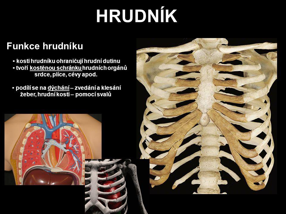 HRUDNÍK Funkce hrudníku • kosti hrudníku ohraničují hrudní dutinu