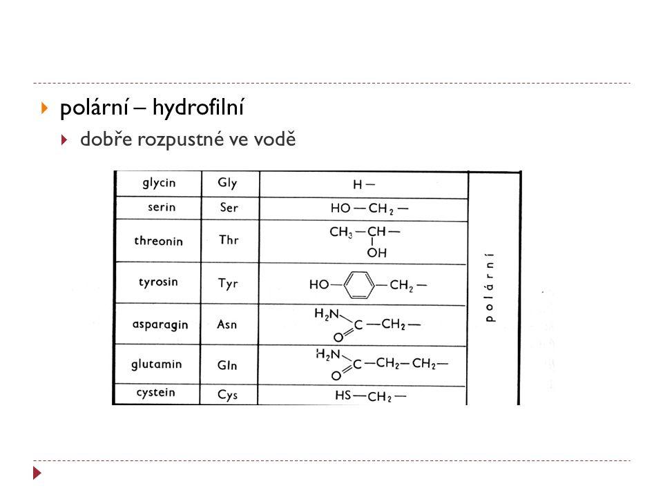 polární – hydrofilní dobře rozpustné ve vodě