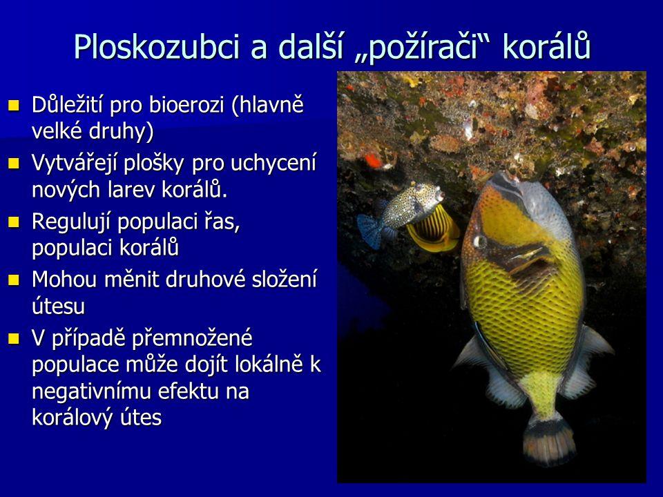 """Ploskozubci a další """"požírači korálů"""