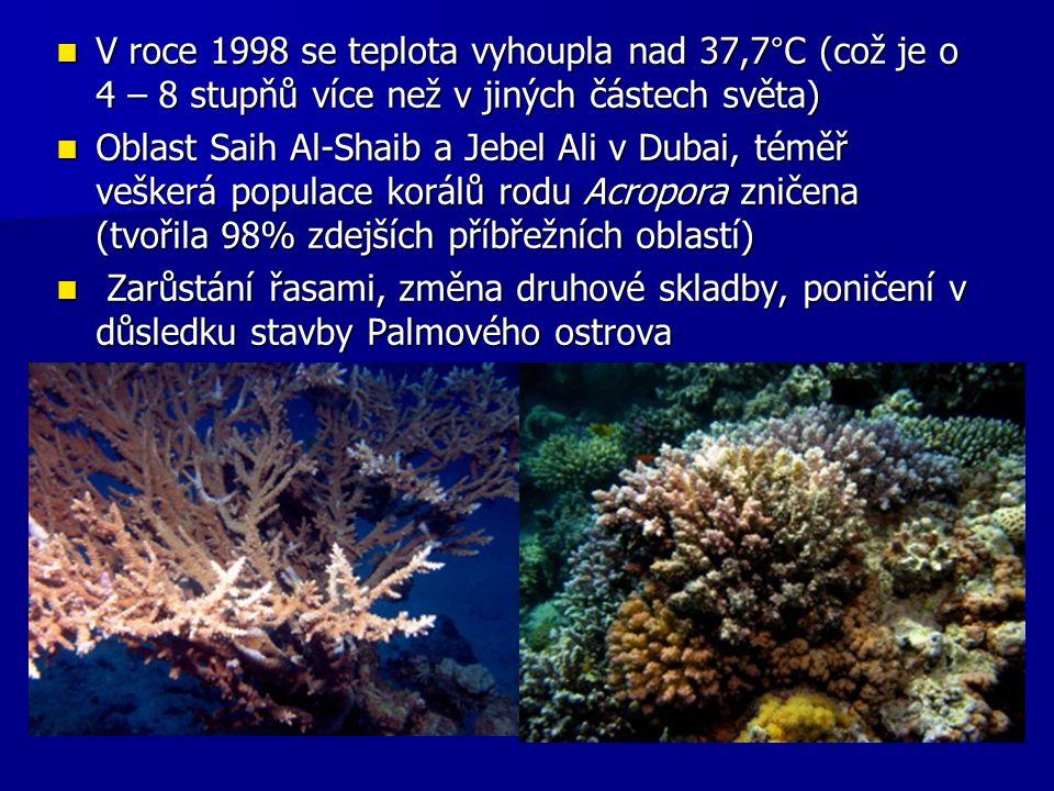 V roce 1998 se teplota vyhoupla nad 37,7°C (což je o 4 – 8 stupňů více než v jiných částech světa)