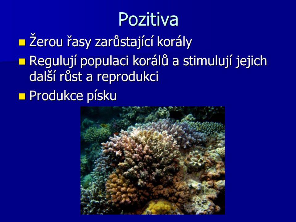 Pozitiva Žerou řasy zarůstající korály