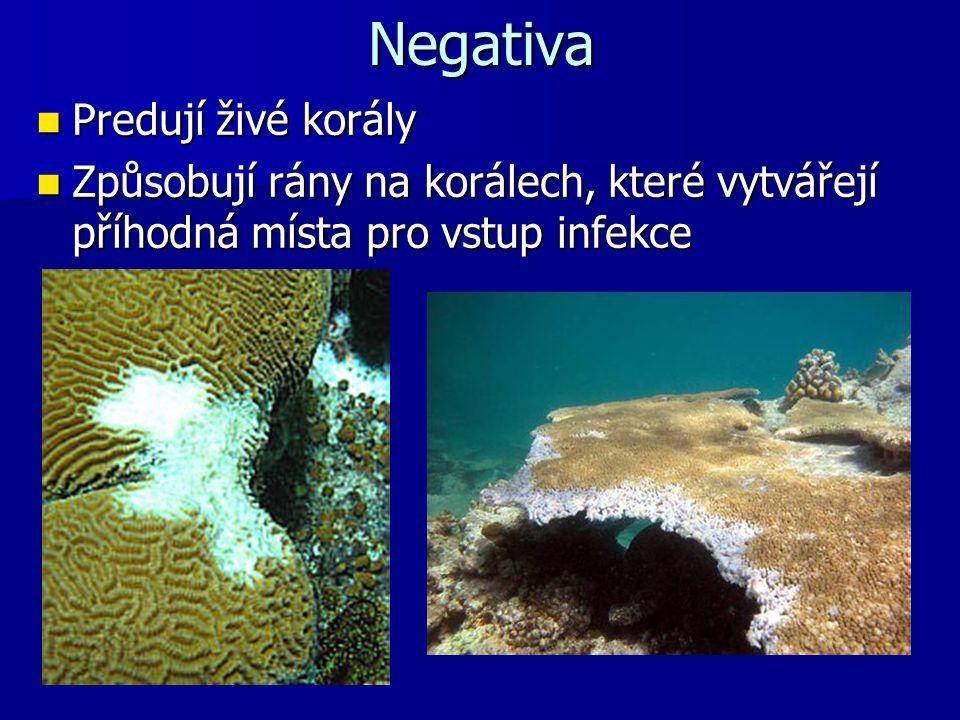 Negativa Predují živé korály