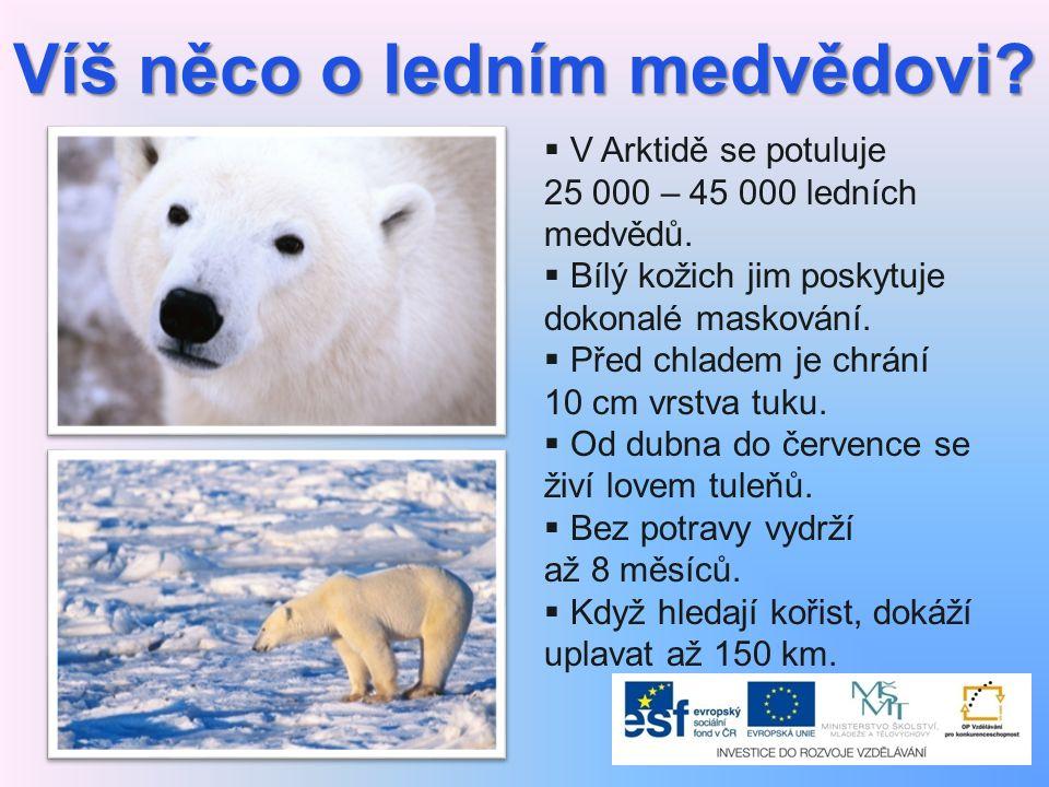 Víš něco o ledním medvědovi