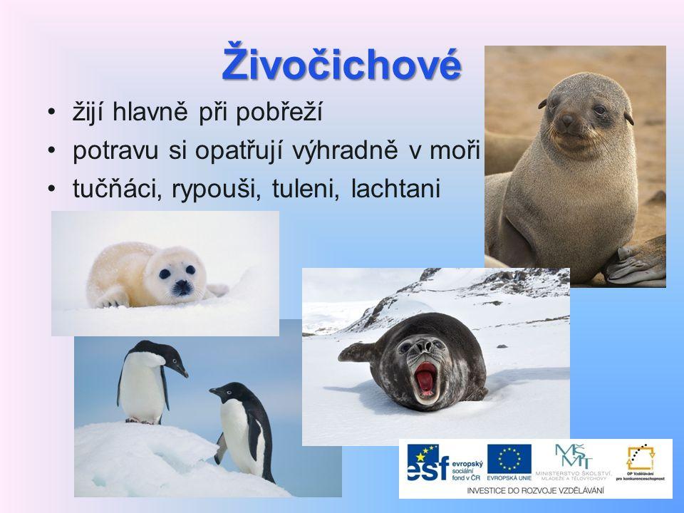 Živočichové žijí hlavně při pobřeží